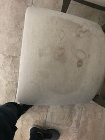 Before & After Upholstery Cleaning in Fort Lauderdale, FL (3)