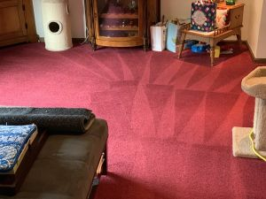 Carpet cleaning by Certified Green Team